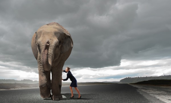 Take on the Elephant – What I Learned from Our Passport Disaster